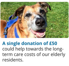 A single donation of £50