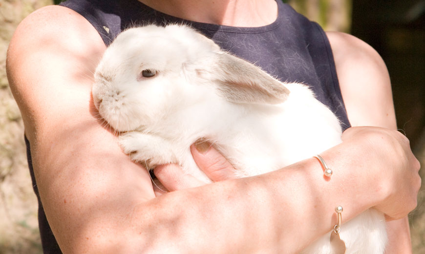A rabbit in owners arms