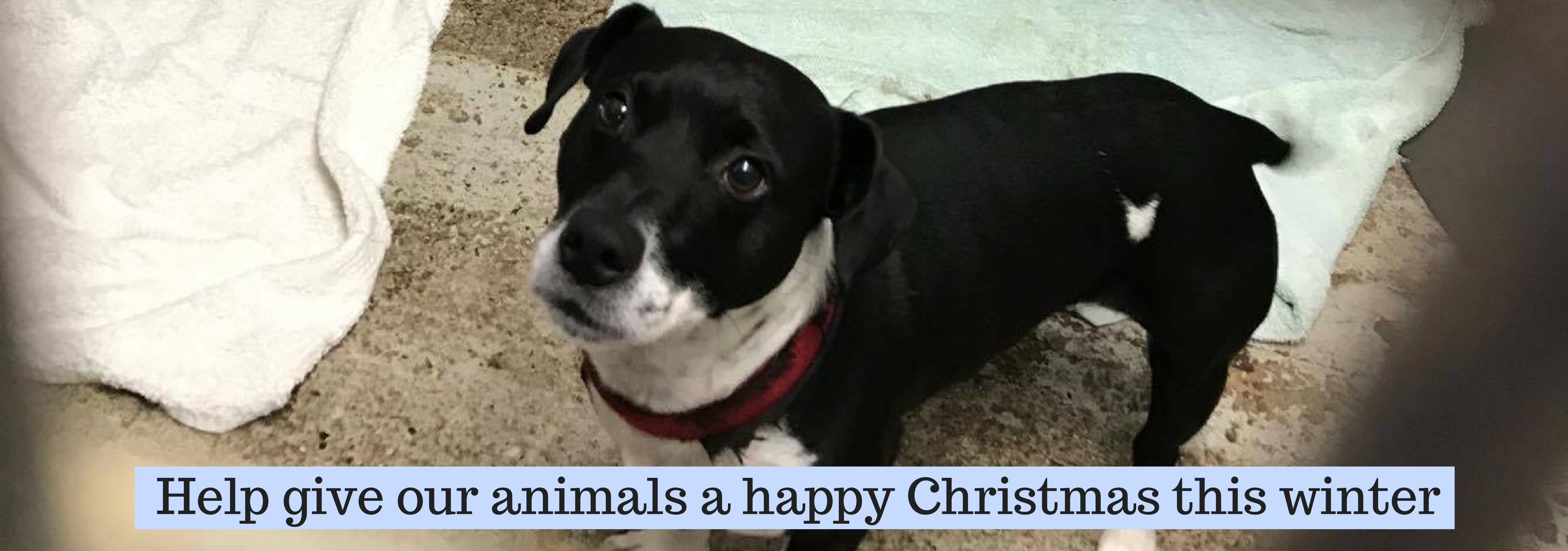 Christmas Helping Homeless.Give A Homeless Pet A Happy Christmas This Winter National