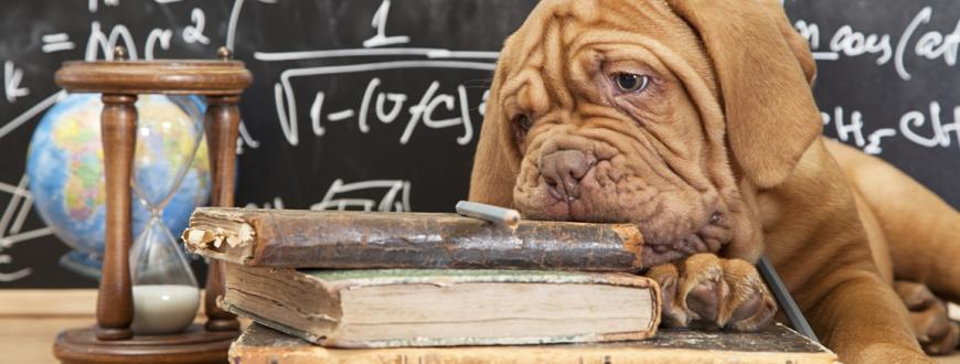 Pet Education Resources for Schools