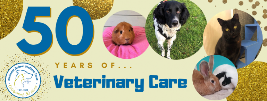 Guest Blog: 50 years of veterinary care