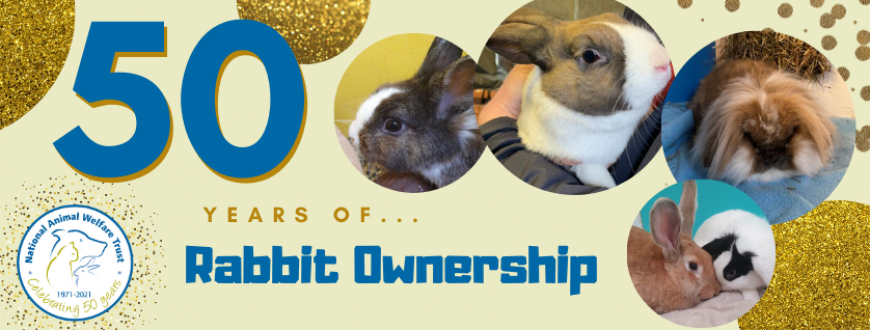 50 years of Rabbit Ownership