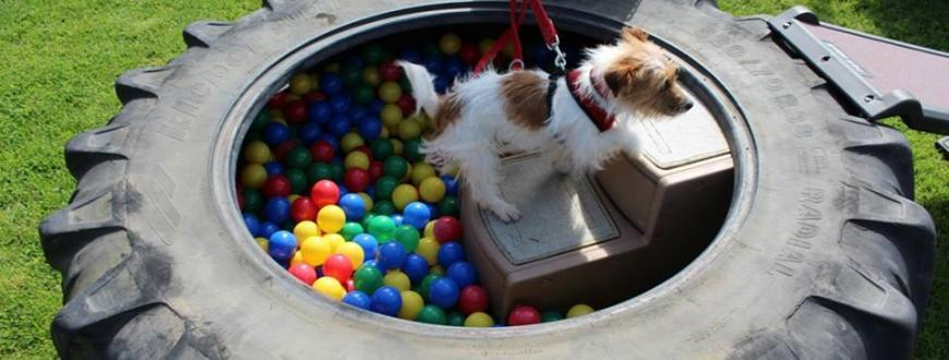 A rescue dog enjoying playing at a NAWT charity animal rehoming centre