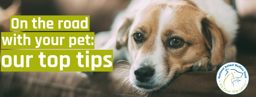 Top Tips To Keep Your Pet Safe On The Road National Animal Welfare Trust