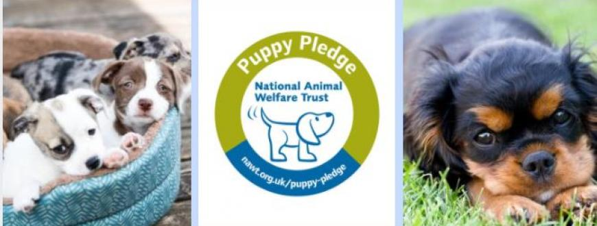 Be Puppy Aware Sign The Pledge And Help Spread The Word National