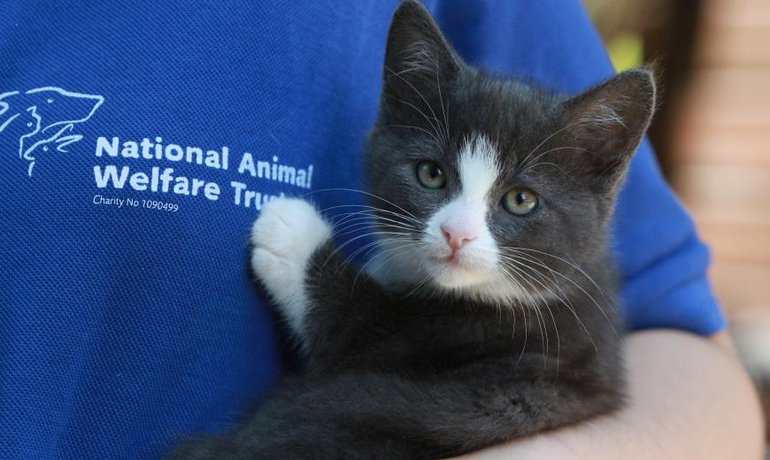 Kitten at a NAWT rehoming Centre