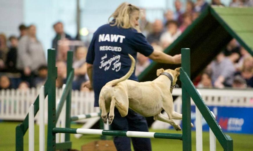 Dog Agility at one of our events