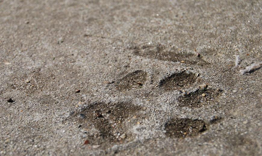 Cat pawprint at the Clacton rehoming centre