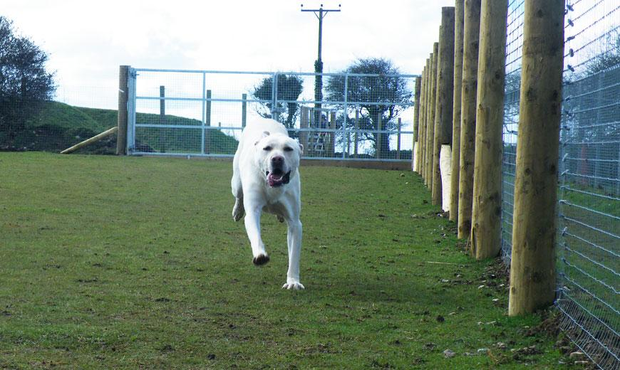 Dog running happily at the Cornwall rehoming centre