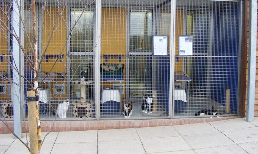 Cattery at the Somerset animal rehoming centre