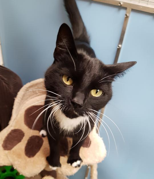 Sooty is looking for his forever home