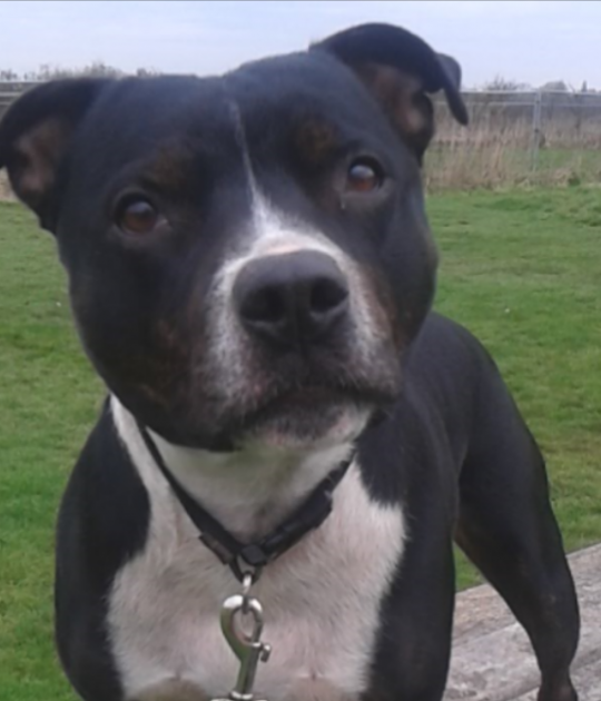 Jack is looking for his forever home
