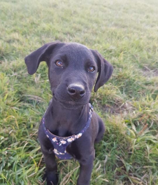 Tootsie is looking for her forever home