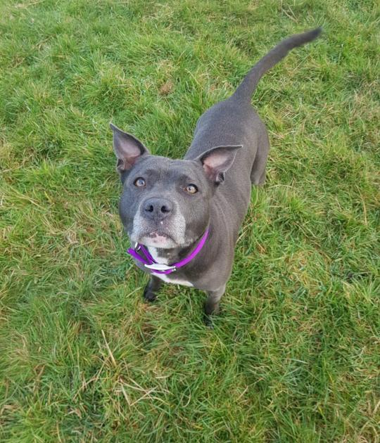 Willow is looking for a home