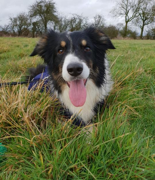 Max is looking for his forever home