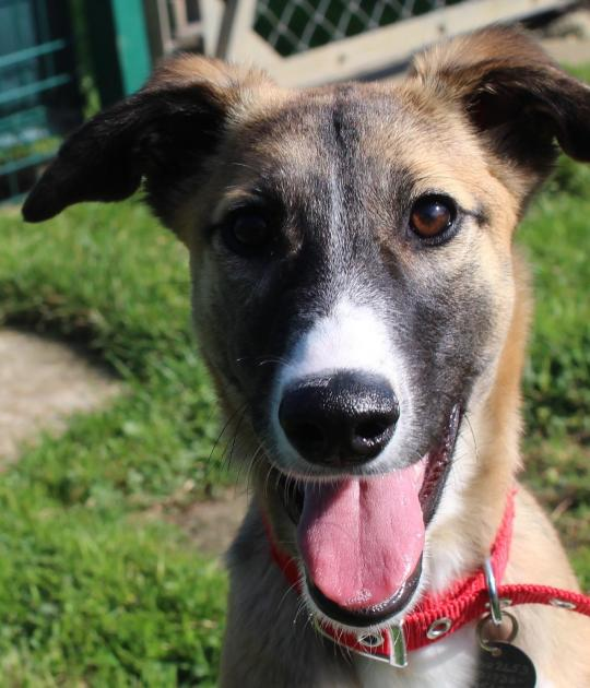 Dogs For Rehoming Cornwall Uk