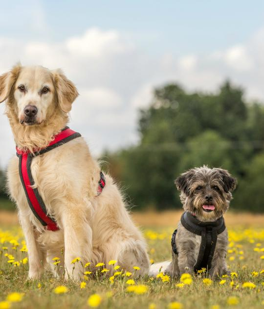 Pip and Lewie are looking for a home together