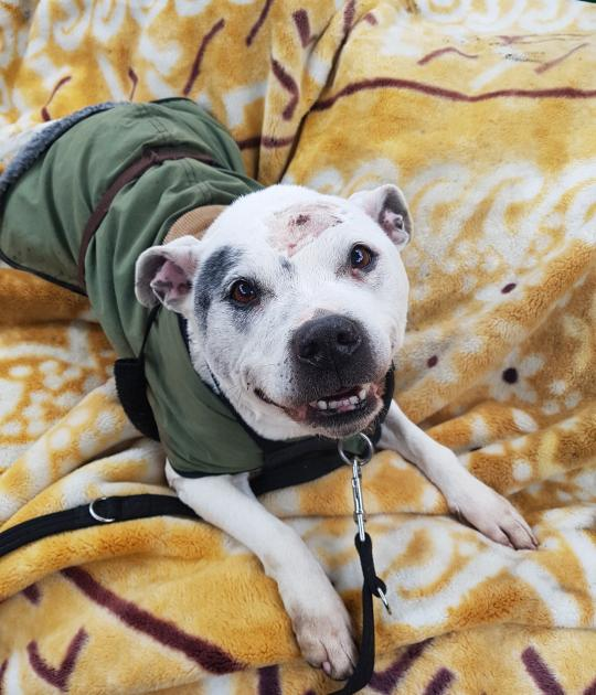 Casper is looking for a family who is happy to foster before adopting