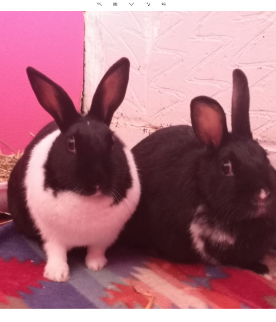 Ziggy and Paws are looking for a home together