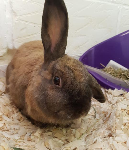 Flopsy is looking for his forever home