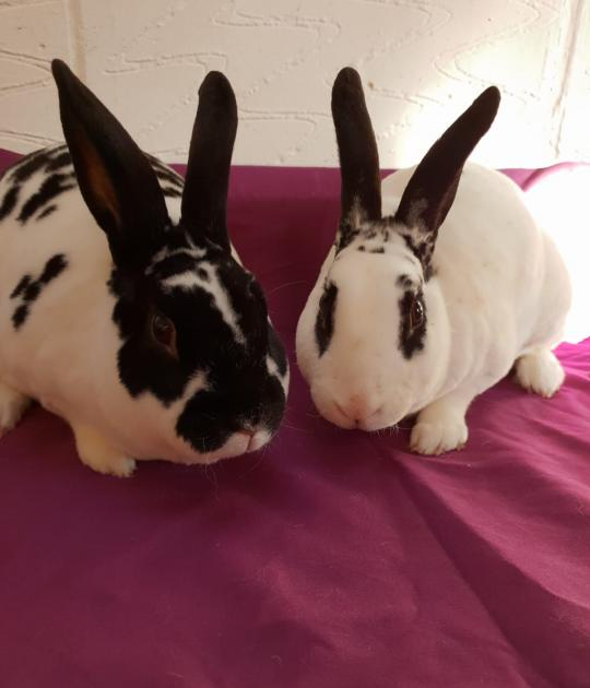 Purdy and Oddball is looking for a home together
