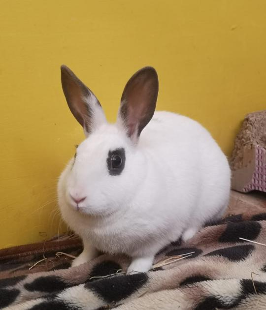 Polar is looking for a new with a female rabbit