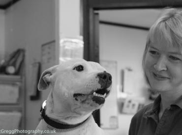 Staffie Tara with Receptionist