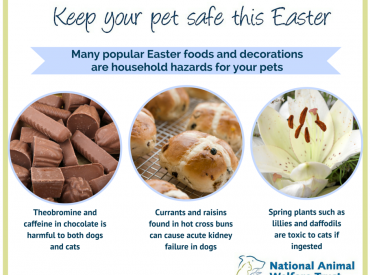 Poster for keeping pets safe at Easter