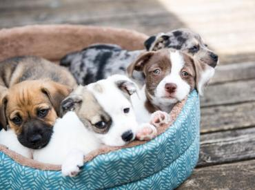 Advice on Buying a Puppy?