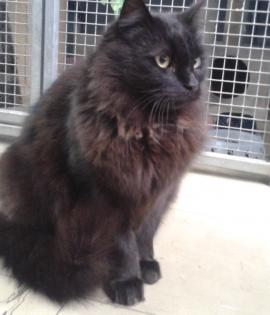 Buster is looking for a new home
