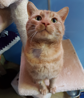 Gingy is looking for his forever home