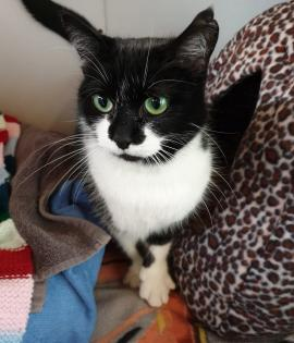 Sweetpea is looking for her forever home