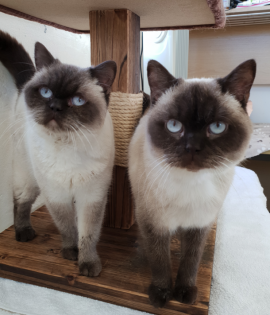 Mulan and Elsa is looking for a home together