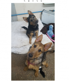 Penny and Pumba looking for a home