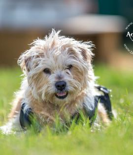 Fudge looking for his forever home