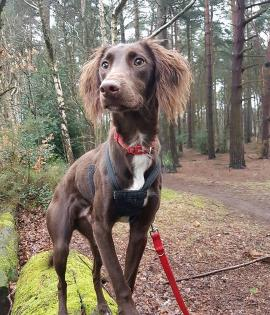 Ronnie looking for his forever home