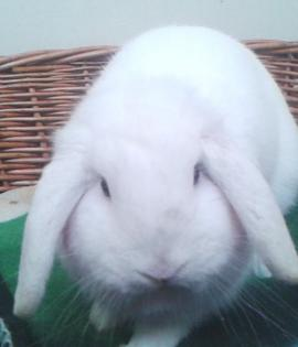 Polo is looking for his forever home, with a female rabbit