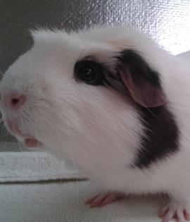 Dumbo is looking for his forever home, and looking for a girl friend