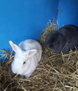 Dusty and Nibbles 1