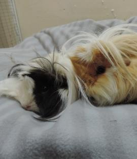 Pippin and Smudge 1