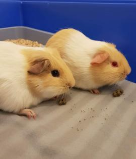 Fred and George are both looking for a home together