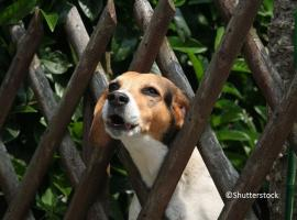 Dog barking through fence