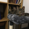 Cats - cinders and smokey
